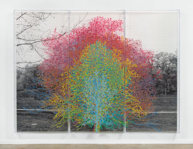 Charles Gaines. Numbers and Trees, Central Park, Series I, Tree #9, 2016. Black-and-white photograph, acrylic on plexiglass (3 panels), each 96 x 42 in (243.9 x 106.7 cm), overall approx. 8 ft x 10 ft 6 in (243.9 x 320 cm). © Charles Gaines. Courtesy Paula Cooper Gallery, New York.