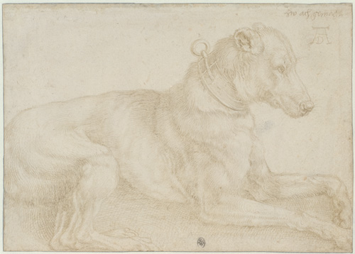 Albrecht Dürer. Dog resting, c1520. Silverpoint over charcoal on pale pink prepared paper, 12.8 x 18 cm. © The Trustees of the British Museum.