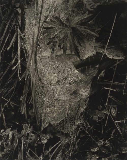 Paul Strand. Cobweb in Rain, Georgetown, Maine, 1927 (negative); 1927 (print). Gelatin silver print, Image: 9 11/16 x 7 13/16 in (24.6 x 19.8 cm), Philadelphia Museum of Art, 125th Anniversary Acquisition, The Paul Strand Collection, The Lynne and Harold Honickman Gift of the Julien Levy Collection, 2001 © Paul Strand Archive/Aperture Foundation.
