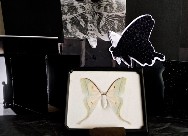 Michelle Stuart. Moth, 2015. Archival inkjet photograph on Hahnemühle paper, 12 x 18 in. Photograph: Michelle Stuart. Courtesy Michelle Stuart.