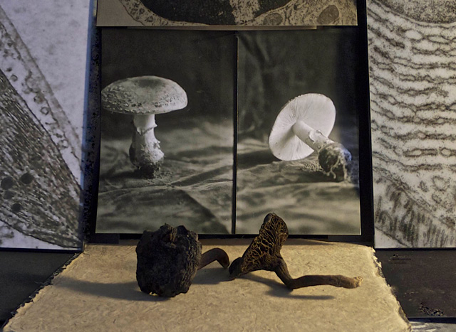 Michelle Stuart. Mushroom Diptych, 2015. Archival inkjet photograph on Hahnemühle paper, 12 x 18 in. Photograph: Michelle Stuart. Courtesy Michelle Stuart.