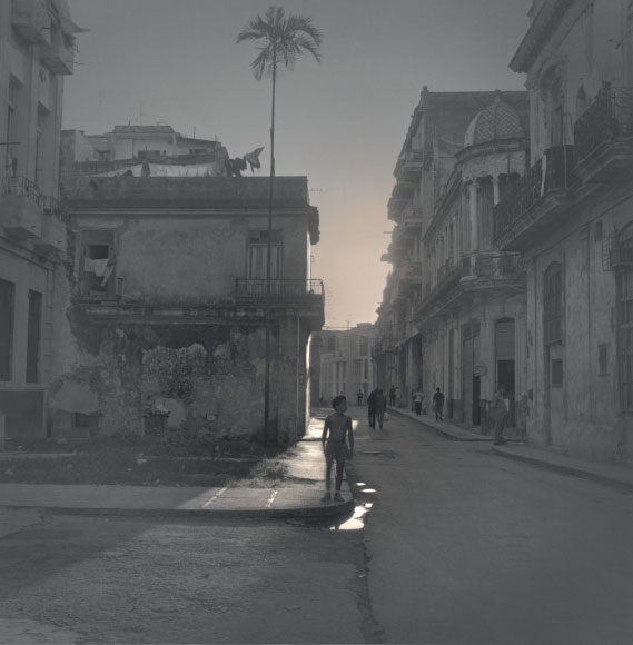 Alexey Titarenko. Palm Tree, Havana, 2003. Gelatin silver print, printed by the artist, edition 3/10, 16 x 16 in (40.6 x 40.6 cm).