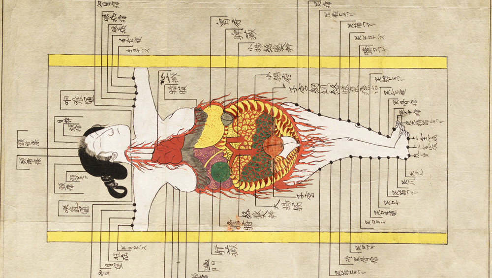 The Royal College of Physicians' exhibition of anatomical illustrations, from medieval times to the present day, reveals the intersecting histories of medicine, art and politics, explains Under the Skin's curator, Katie Birkwood