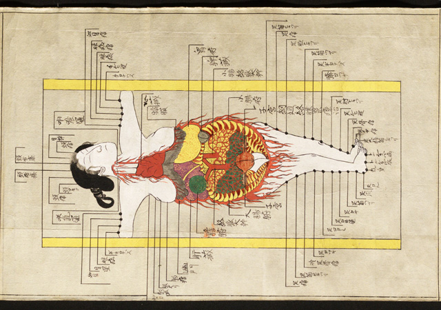 Illustration of the internal organs and acupuncture points in Shishi bessho zui. Hozumi Koremasa, 1820s. © Royal College of Physicians